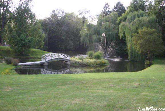 Pond And Bridge