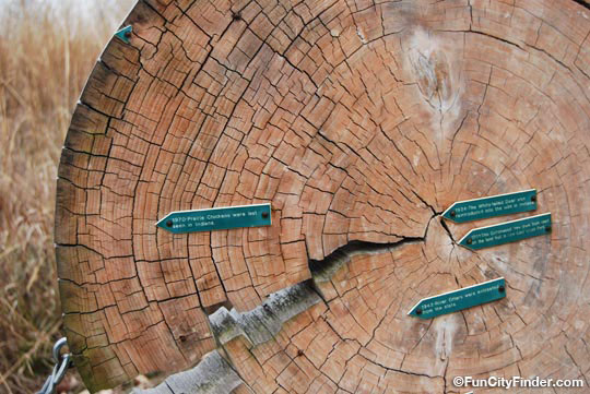 Cool Creek Park Tree Rings