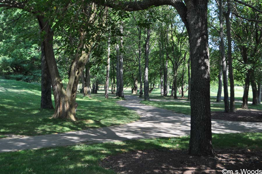Photo of a Tree-Lined Trail