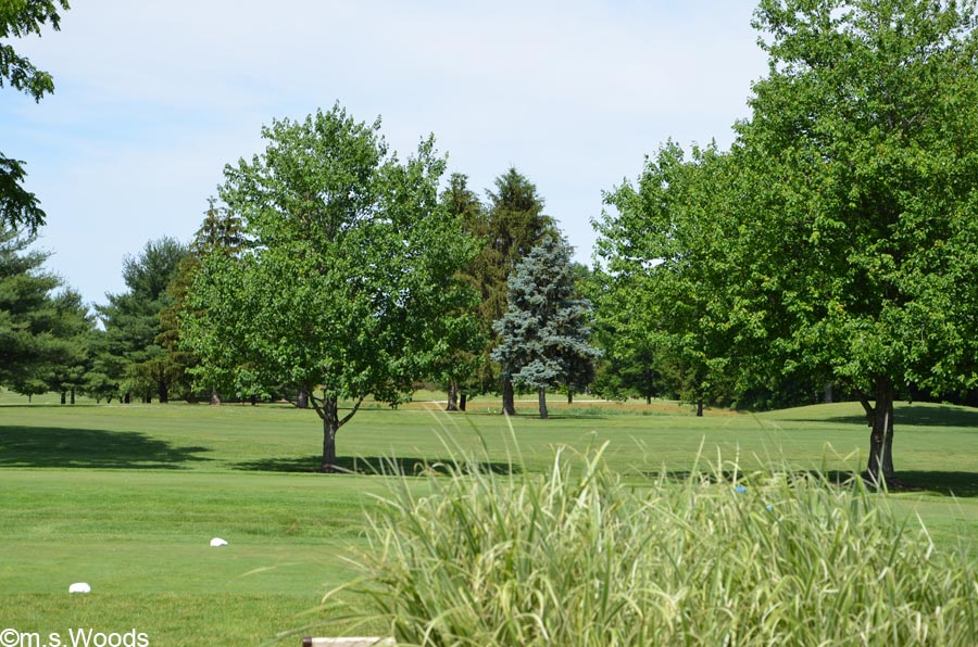 A Scenic View of Pebble Brook Golf Course