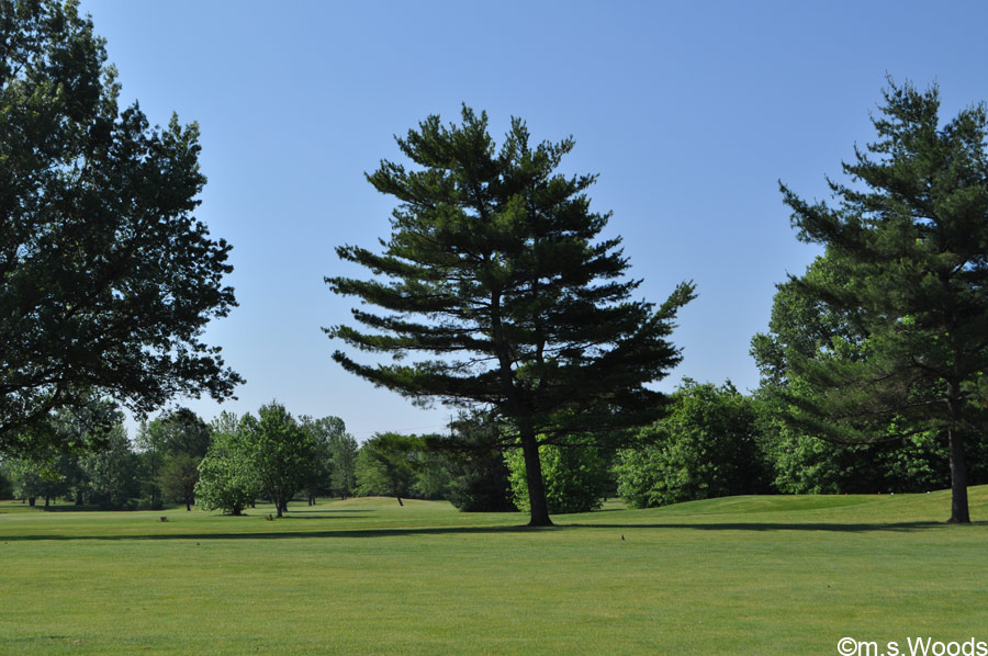 An Expanse of Green at Sahm Golf Course