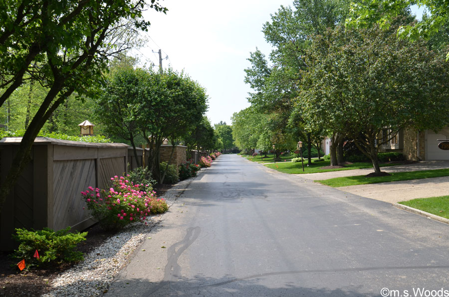 A Street Runs through the Lake Clearwater Neighborhood