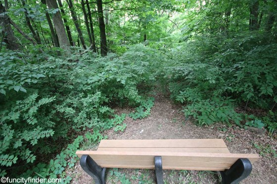 bench-overlooks-blanton-woods