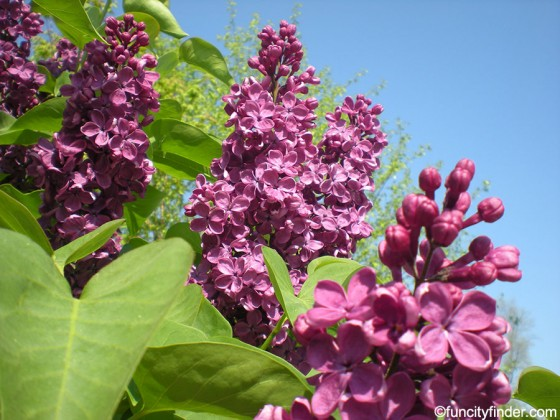 river-heritage-park-purple-flowers-and-sky-carmel-indiana