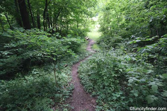 trail-in-blanton-woods-danville