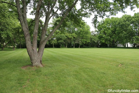 tree-in-open-space-in-stephens-park-brownsburg