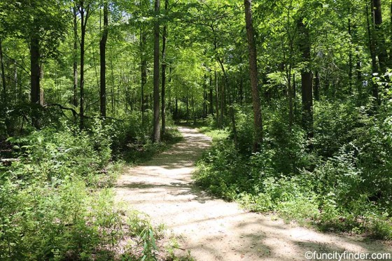 wooded-trail-at-central-park-in-carmel