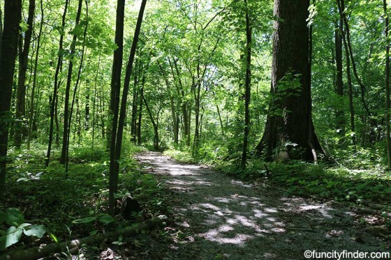 wooded-trail-at-cheeney-creek-park