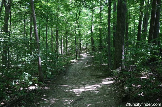 wooded-trail-at-starkey-park